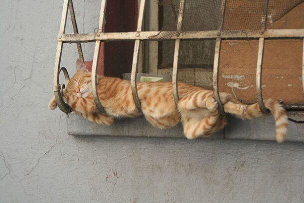 寝相が悪い猫
