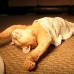 もはやアート級。あまりに寝相の悪い瞬間が撮られた25の猫たち【画像】