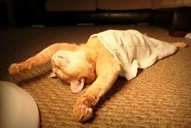 寝相の悪い猫達