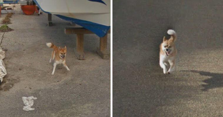 Googleマップカーを追いかける柴犬