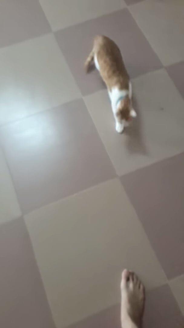地面を滑る猫