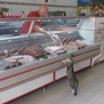 【ほっこり映像】また来ちゃったにゃぁ。ん?これか?肉屋の店員さん、猫に無料でお肉を差し上げた結果、1番の常連さんになるの巻。