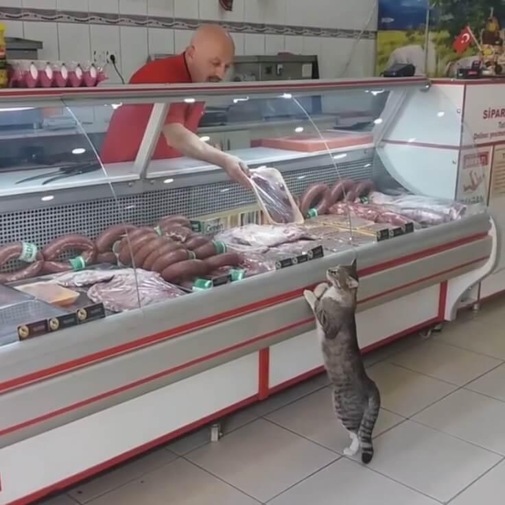 猫に肉をあげる店員