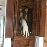 怖い。仏壇にお供えしたお水が勝手に減ってるんだけど…ねぇ、なんか見た?猫「見てないにゃー。。」