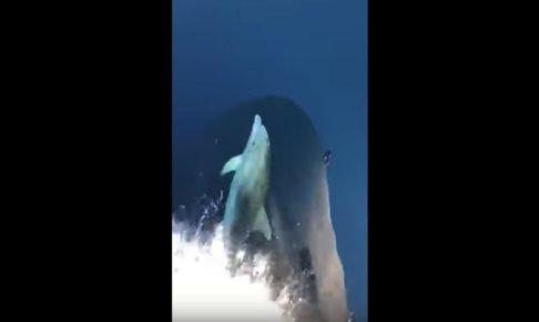 船の先で泳ぐイルカ