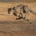 世界最速という称号。この世で最も速い25のモノ・乗り物・動物