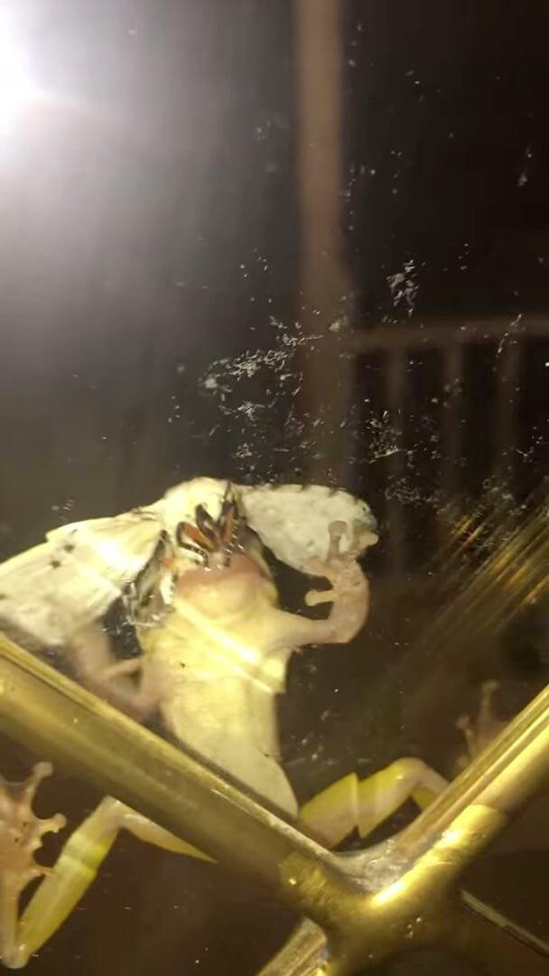 カエルvs蛾の闘い