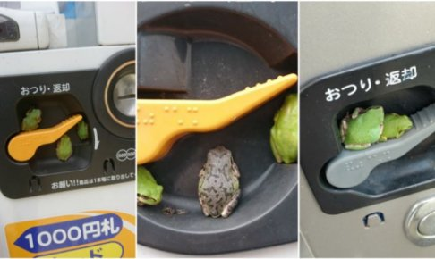 夜の自動販売機に集まるカエル達