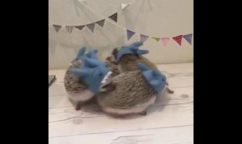 可愛いハリネズミ