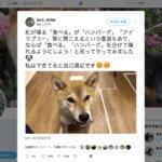 【動画】リアルソフトバンクのお父さんかな?しゃべる犬こと紅(べに)ちゃんがすご可愛い。