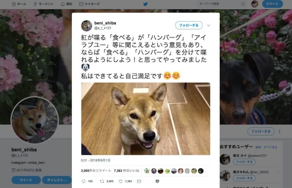 喋る犬-ベニちゃん