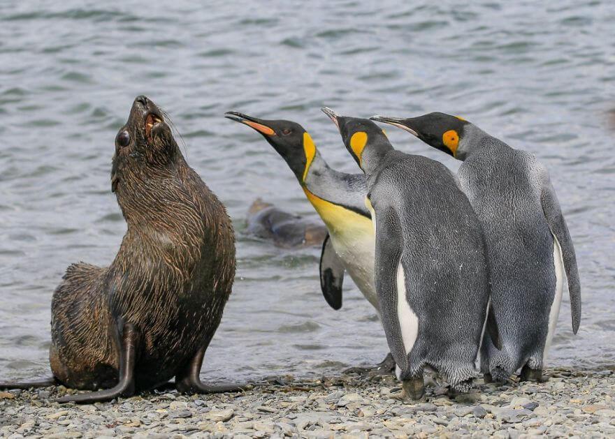 ペンギン-挨拶