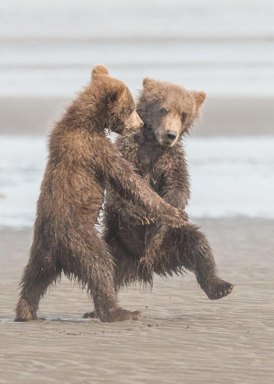 練習擦る熊