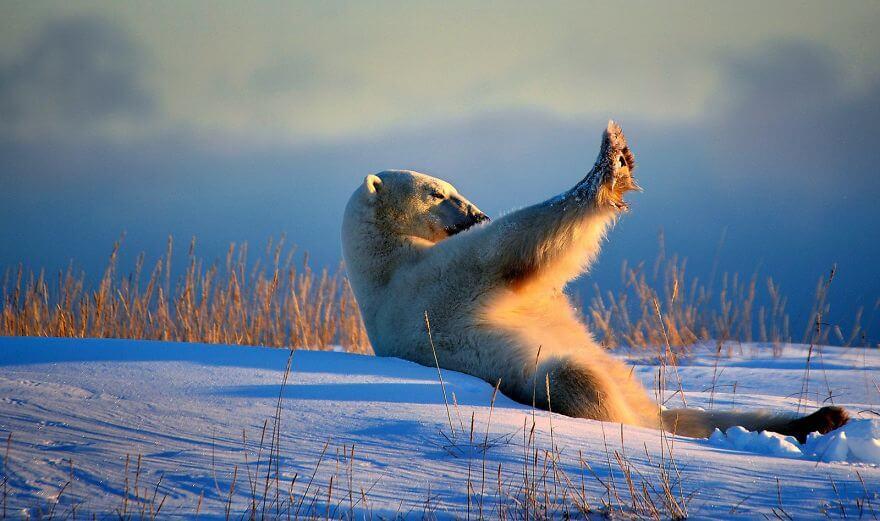 太陽が眩しい白熊