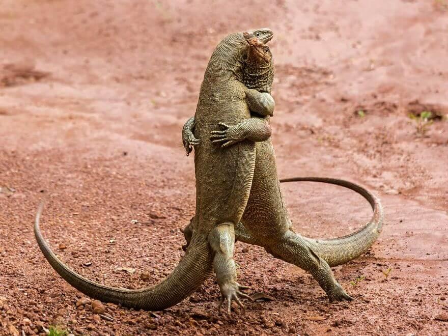 抱きしめ合う爬虫類