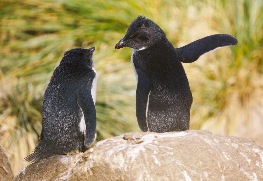 作戦会議するペンギン
