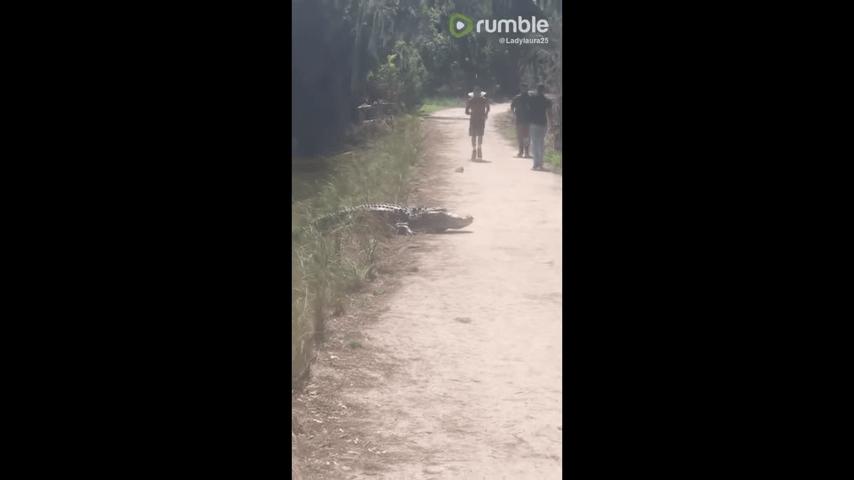 ジョギング中にワニと遭遇