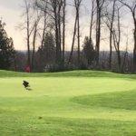 【動画】ゴルフ場での奇跡。カラス…ではなく「イーグル」がボールを加えてホールインワンにしてくれた瞬間