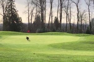 ワシがゴルフボールを持ってホールインワン