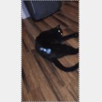 エイリアン出現か…愛猫のお尻の中から得体のしれない光る物体が飛び出す事案が発生。