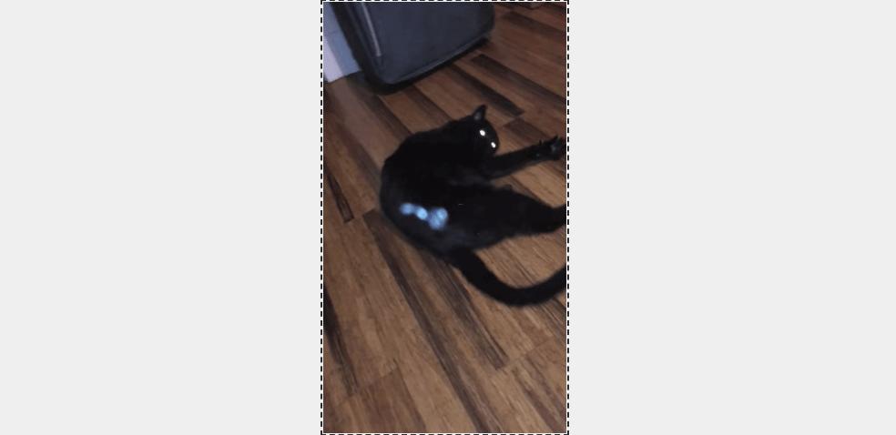 猫のお尻から得体のしれない物質が飛び出る瞬間