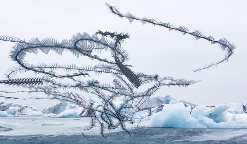 鳥類が飛んだ美しい軌道跡