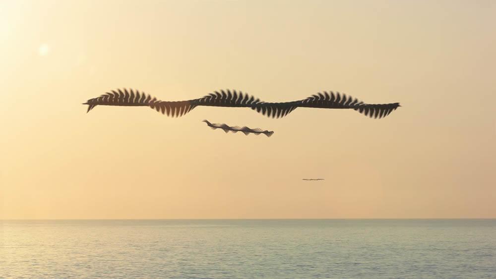 鳥達の飛んだ跡-美しい軌道