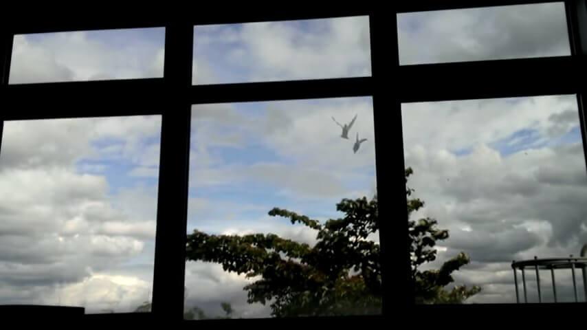 鳥が壁にぶつかる瞬間
