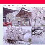 【冬に咲く奇跡の桜】めちゃ綺麗だ…。4月10日、関東に雪が降り積もり「ヒルルクの桜」が実現する