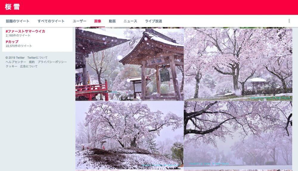 桜が咲いてるのに雪が降る