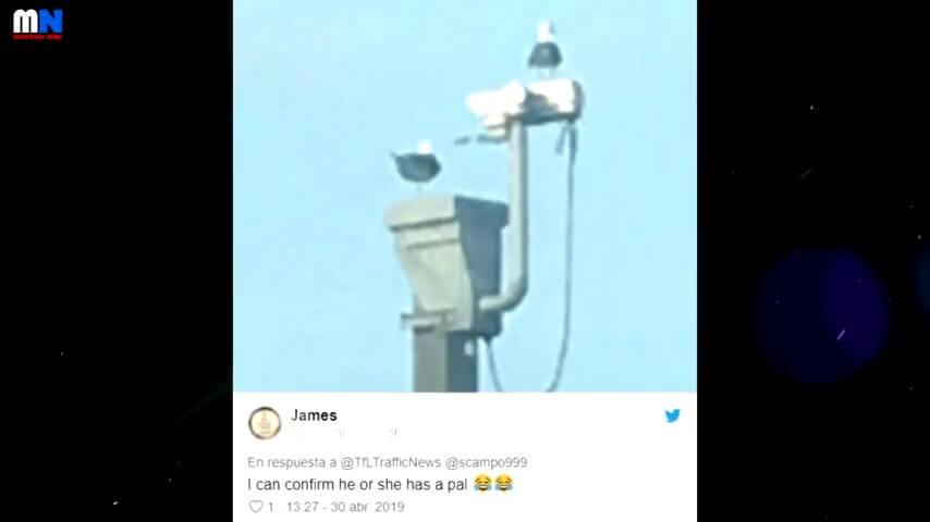 カメラに映ったカモメ