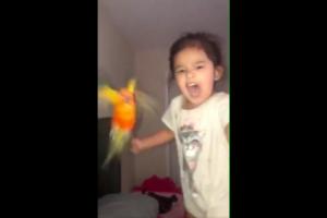 鳥を操る少女